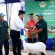 Melalui Wabup Gresik Qosim, Baznas pusat bagikan kambing kepada peternak Dhuafa di Gresik
